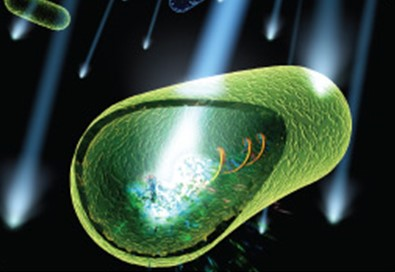 bactérie UV